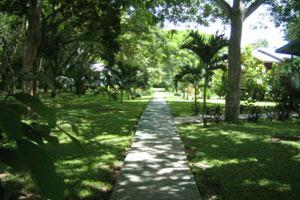 A walk through the yard at Midas Tropical Resort in San Ignaico, Belize